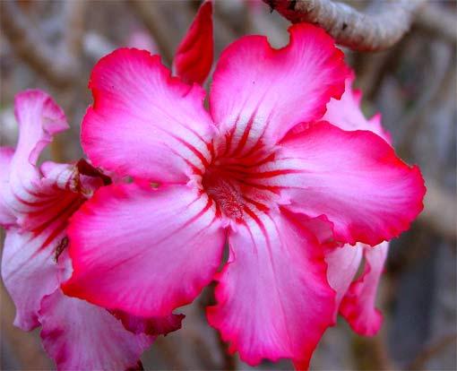 wilde-bloem-in-Ghana.jpg