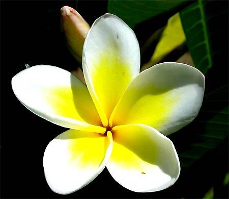 bloem-Tanzania.jpg